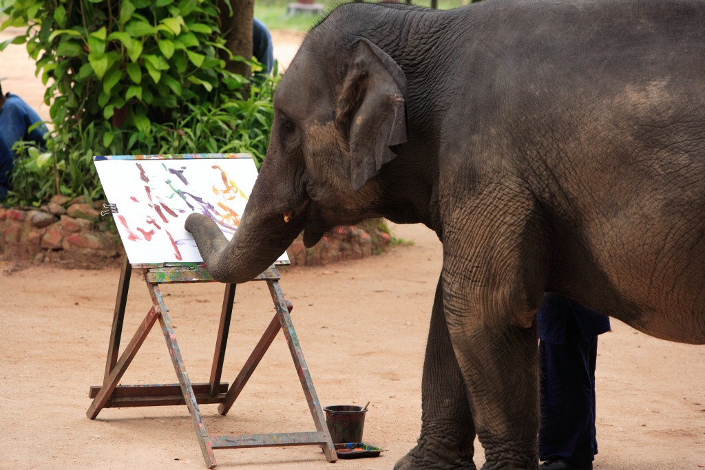 Thai Elephants Conservation Centre, Lampang (5)